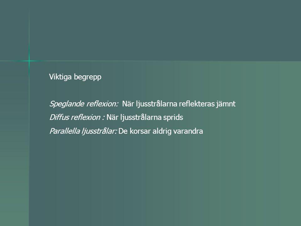 Viktiga begrepp Speglande reflexion: När ljusstrålarna reflekteras jämnt Diffus reflexion : När ljusstrålarna sprids Parallella ljusstrålar: De korsar