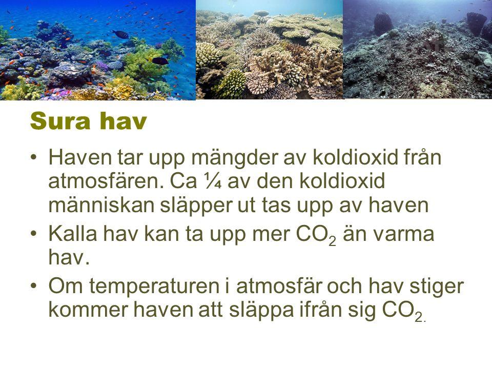 Sura hav Haven tar upp mängder av koldioxid från atmosfären. Ca ¼ av den koldioxid människan släpper ut tas upp av haven Kalla hav kan ta upp mer CO 2