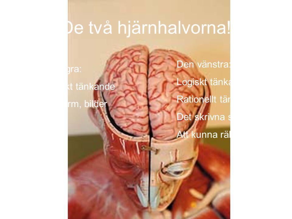 De två hjärnhalvorna.