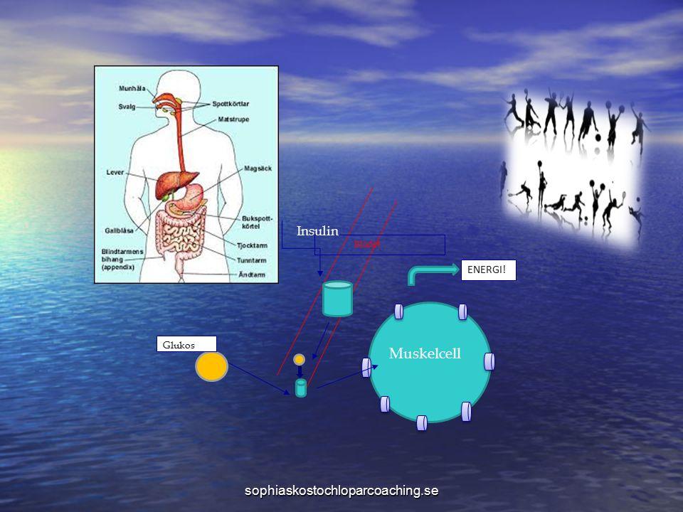 sophiaskostochloparcoaching.se Blodet ENERGI! Glukos Insulin Muskelcell