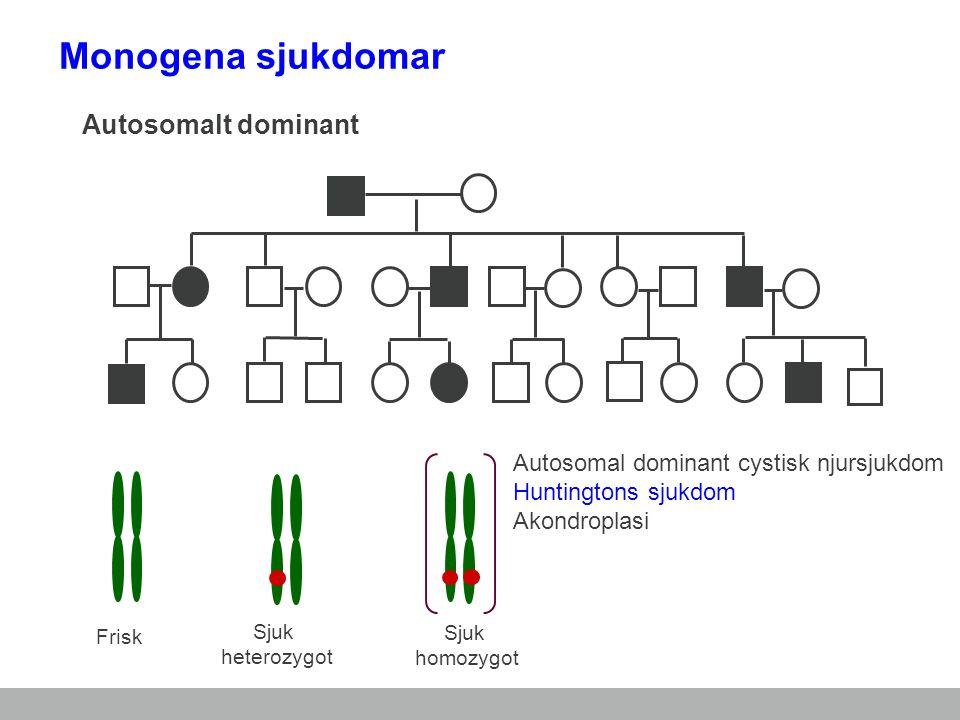 Frisk Sjuk heterozygot Sjuk homozygot Autosomal dominant cystisk njursjukdom Huntingtons sjukdom Akondroplasi Autosomalt dominant Monogena sjukdomar