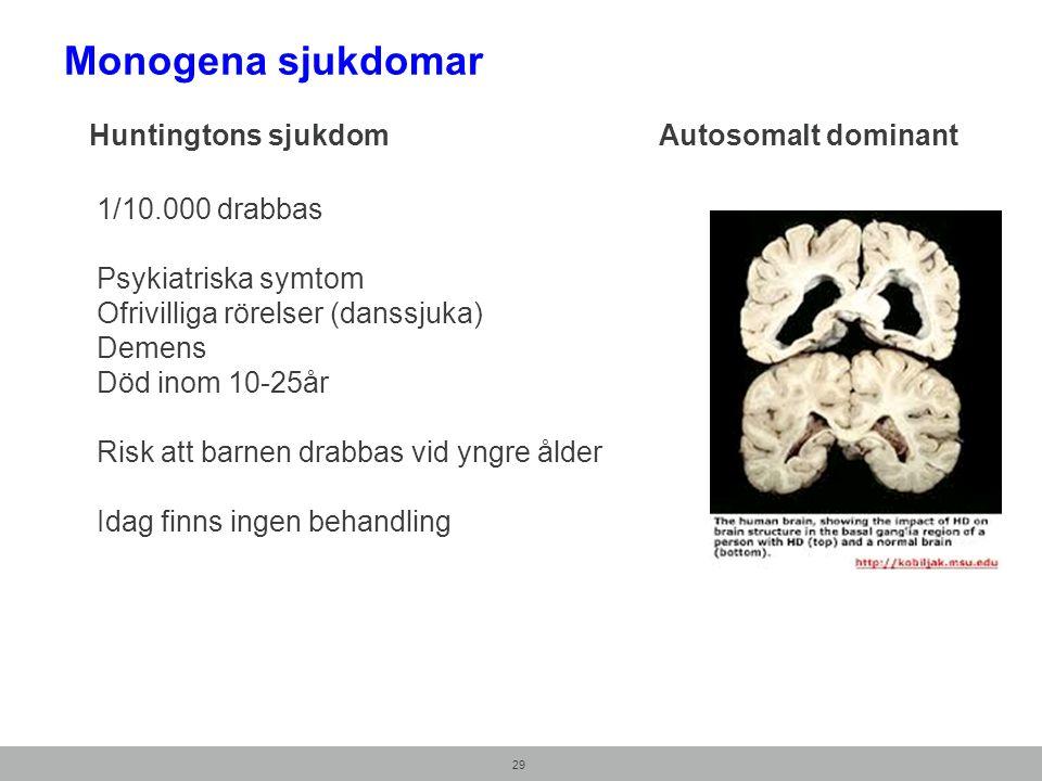 Huntingtons sjukdom Autosomalt dominant 29 1/10.000 drabbas Psykiatriska symtom Ofrivilliga rörelser (danssjuka) Demens Död inom 10-25år Risk att barnen drabbas vid yngre ålder Idag finns ingen behandling Monogena sjukdomar