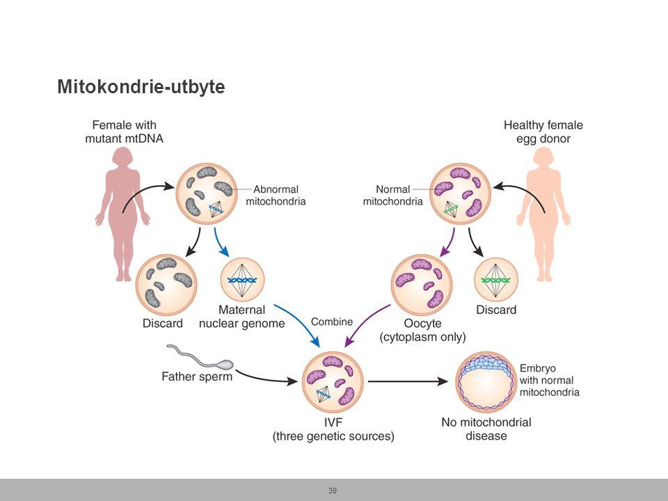 Mitokondrie-utbyte 39