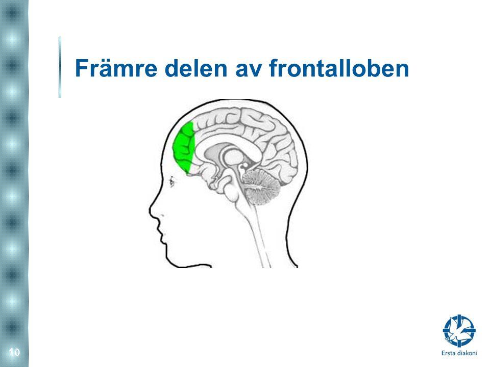 Främre delen av frontalloben 10