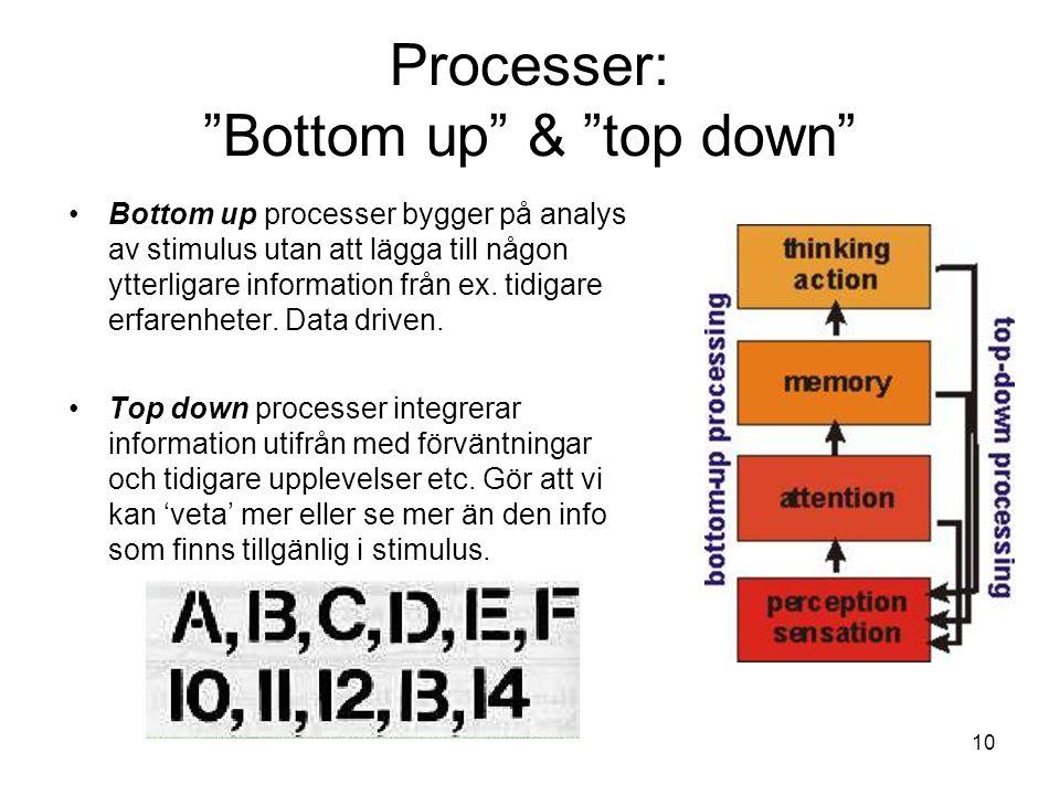 10 Processer: Bottom up & top down Bottom up processer bygger på analys av stimulus utan att lägga till någon ytterligare information från ex.