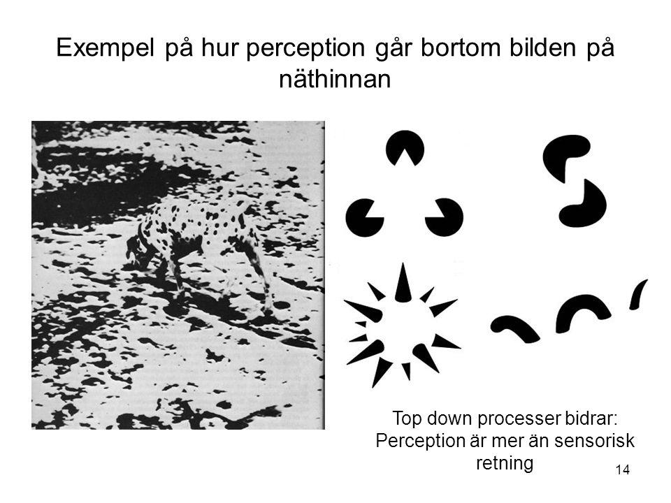 14 Exempel på hur perception går bortom bilden på näthinnan Top down processer bidrar: Perception är mer än sensorisk retning