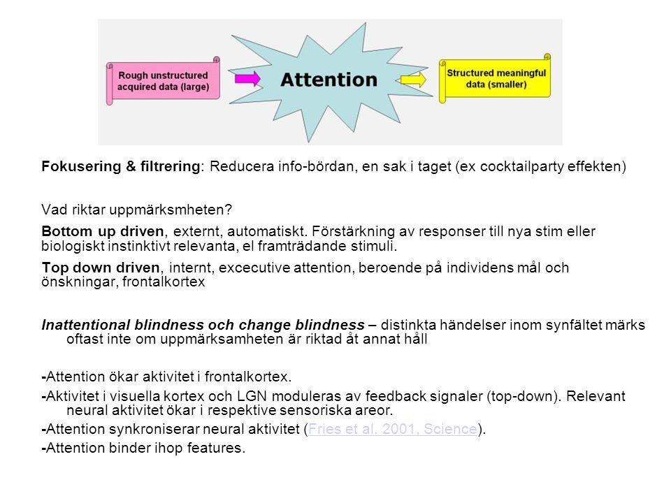 Fokusering & filtrering: Reducera info-bördan, en sak i taget (ex cocktailparty effekten) Vad riktar uppmärksmheten.
