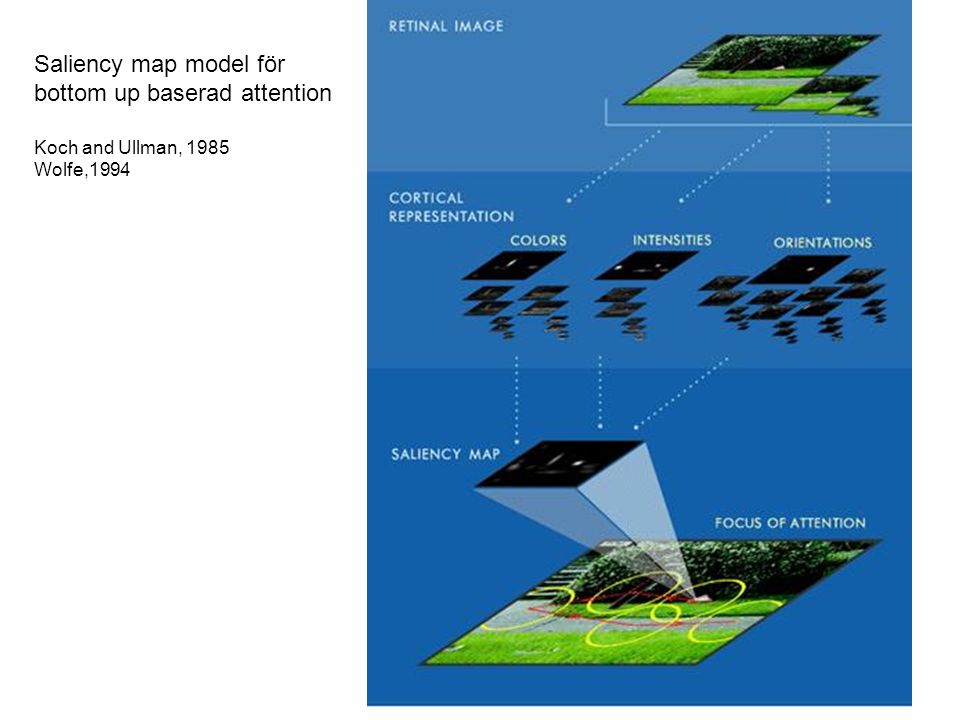 Saliency map model för bottom up baserad attention Koch and Ullman, 1985 Wolfe,1994