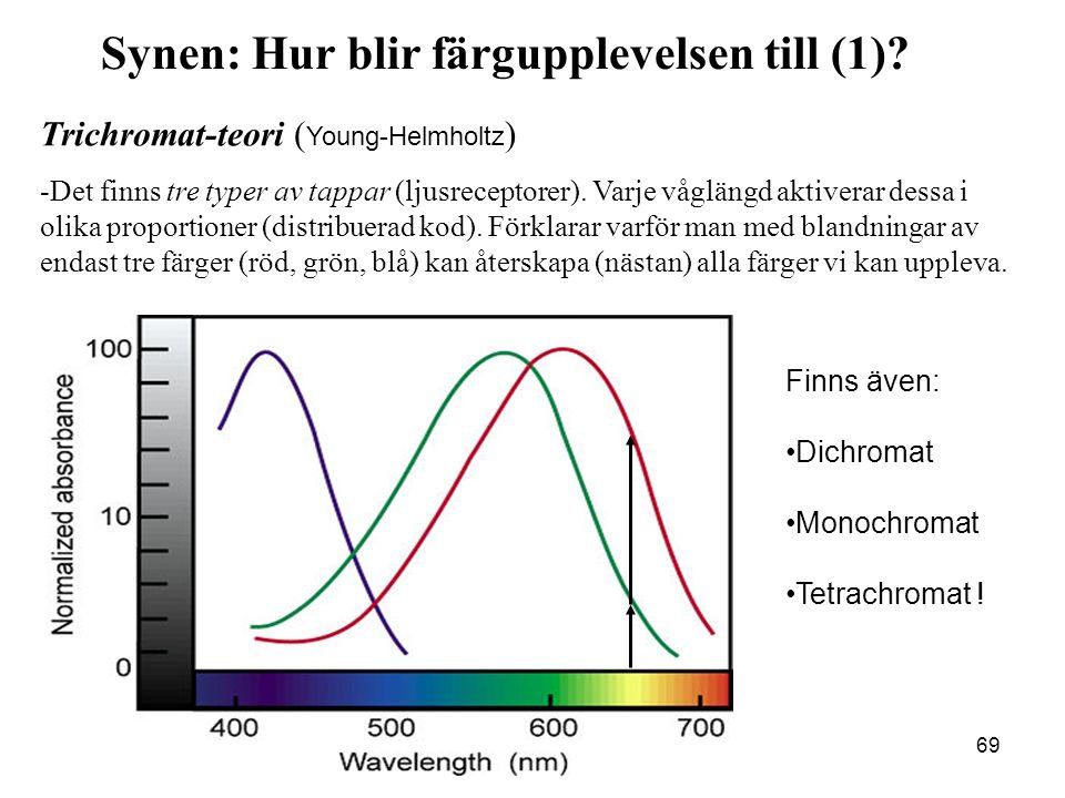 69 Trichromat-teori ( Young-Helmholtz ) -Det finns tre typer av tappar (ljusreceptorer).