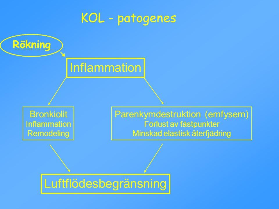 KOL - patogenes Inflammation Luftflödesbegränsning Parenkymdestruktion (emfysem) Förlust av fästpunkter Minskad elastisk återfjädring Bronkiolit Infla