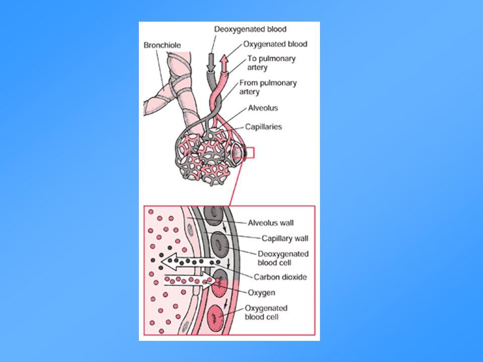 KOL och astma är olika sjukdomar Astma - luftvägsinflammation CD4+ T-lymfocyter Eosinofiler KOL - luftvägsinflammation CD8+ T-lymfocyter Makrofager Neutrofiler Luftflödesbegränsning Reversibel Ej helt reversibel