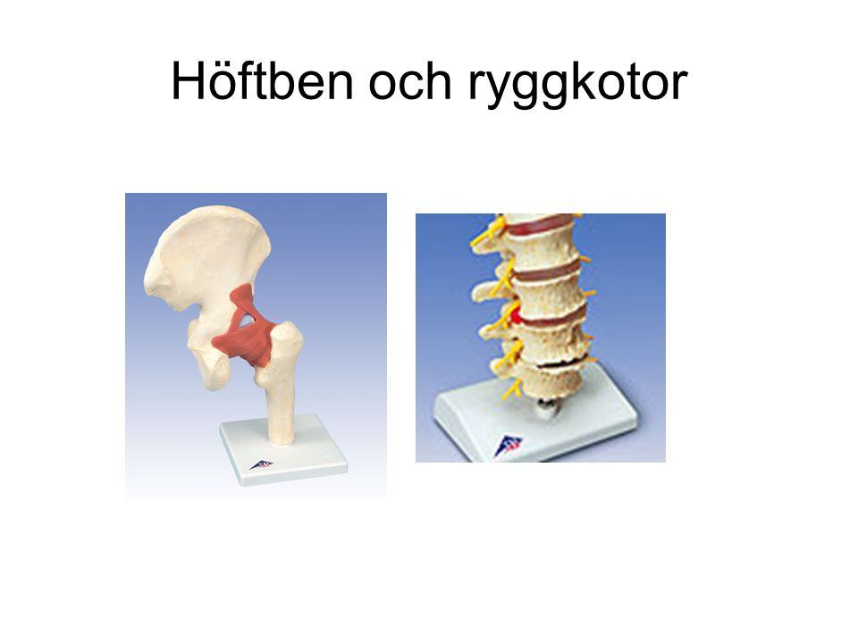 Höftben och ryggkotor