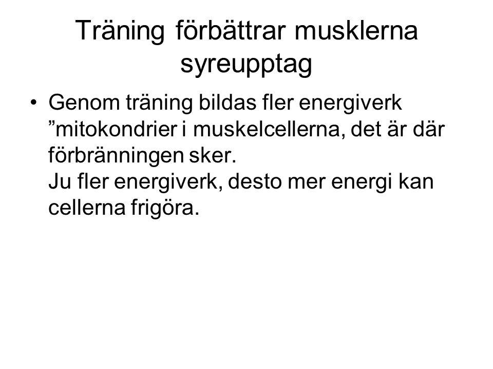 """Träning förbättrar musklerna syreupptag Genom träning bildas fler energiverk """"mitokondrier i muskelcellerna, det är där förbränningen sker. Ju fler en"""