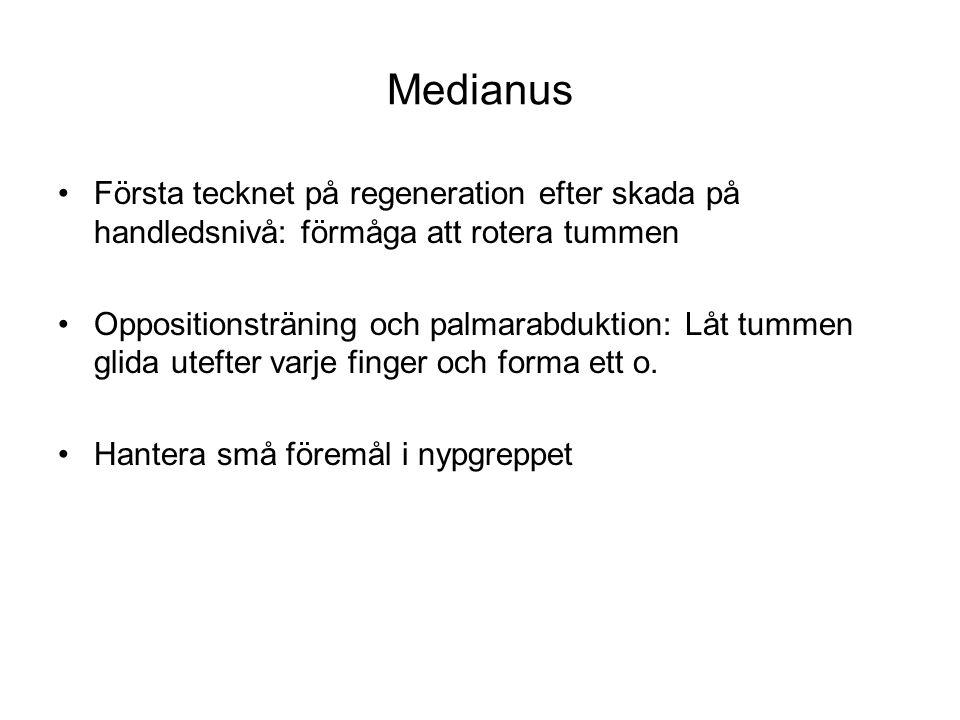 Medianus Första tecknet på regeneration efter skada på handledsnivå: förmåga att rotera tummen Oppositionsträning och palmarabduktion: Låt tummen glid