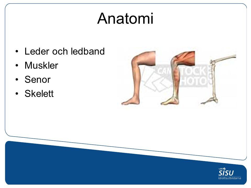 Anatomi Leder och ledband Muskler Senor Skelett