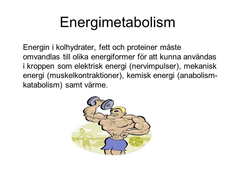 Energimetabolism Energin i kolhydrater, fett och proteiner måste omvandlas till olika energiformer för att kunna användas i kroppen som elektrisk energi (nervimpulser), mekanisk energi (muskelkontraktioner), kemisk energi (anabolism- katabolism) samt värme.