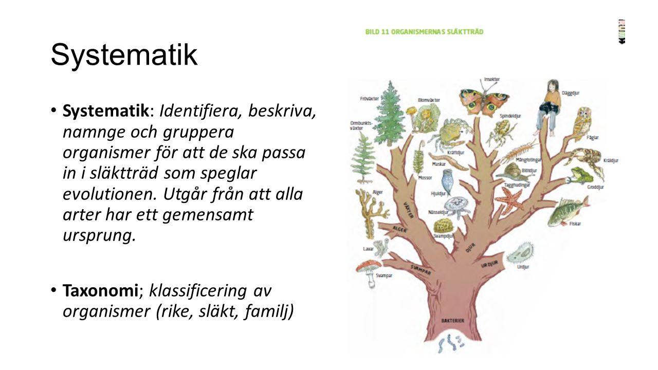 Systematik Systematik: Identifiera, beskriva, namnge och gruppera organismer för att de ska passa in i släktträd som speglar evolutionen.