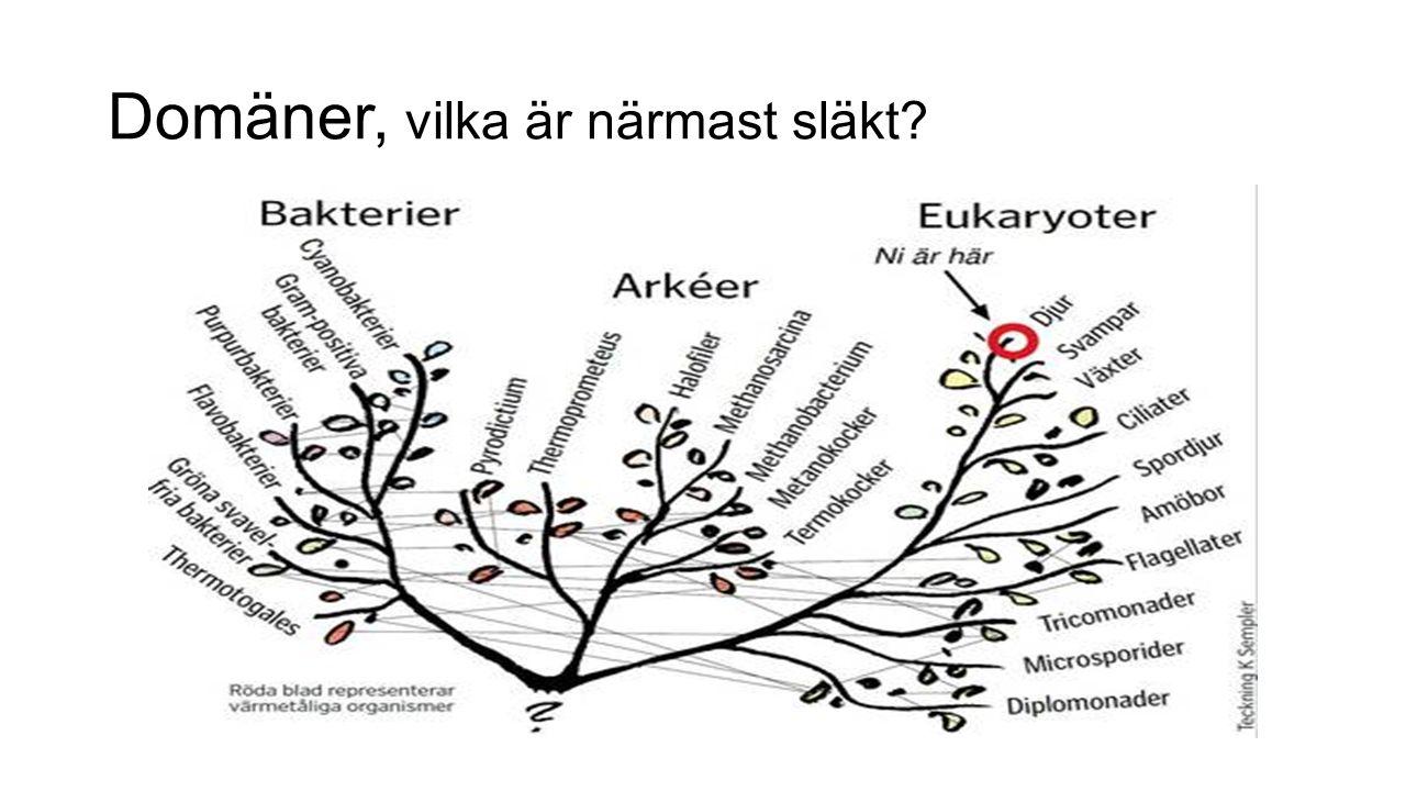 Fylogeni: Organismers utvecklingshistoria Naturlig grupp (monofyletisk) om… - Alla arter som tillhör en grupp ska ha en gemensam förfader.