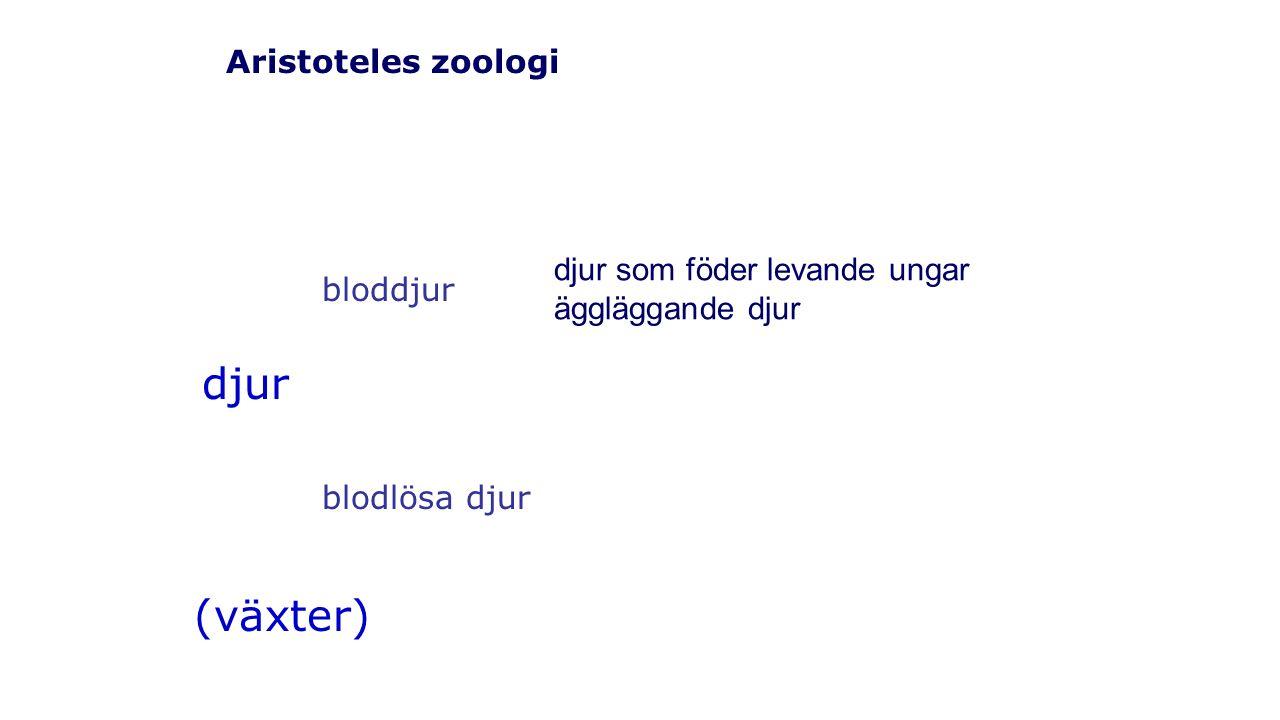 Aristoteles zoologi djur (växter) bloddjur blodlösa djur djur som föder levande ungar äggläggande djur