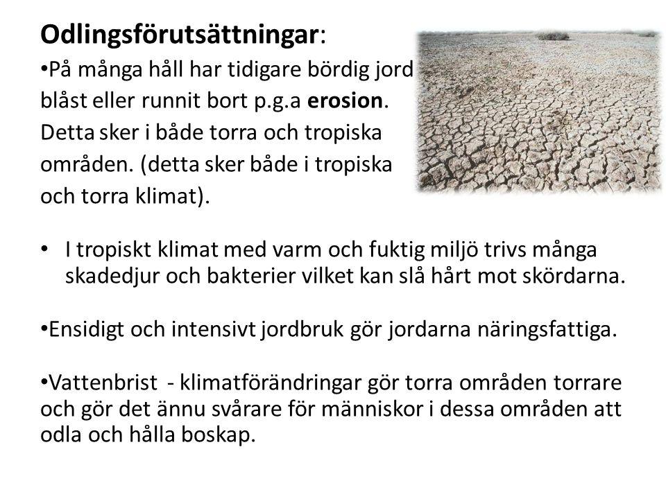 Odlingsförutsättningar: På många håll har tidigare bördig jord blåst eller runnit bort p.g.a erosion.