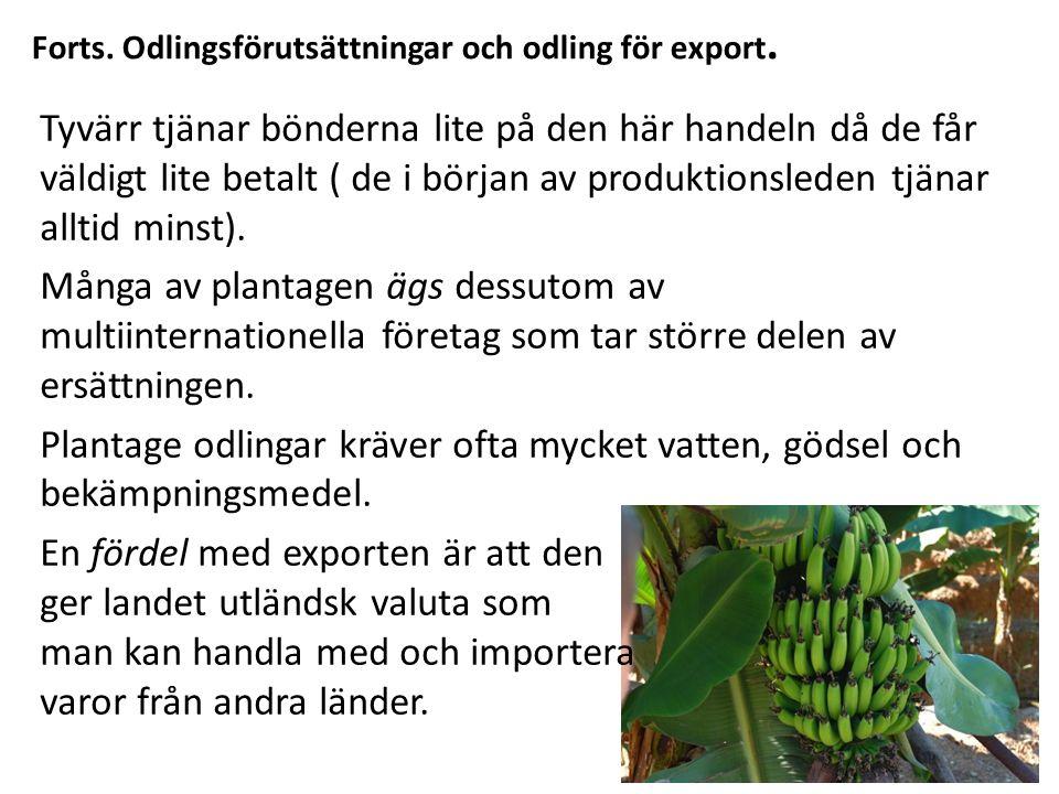 Forts. Odlingsförutsättningar och odling för export.