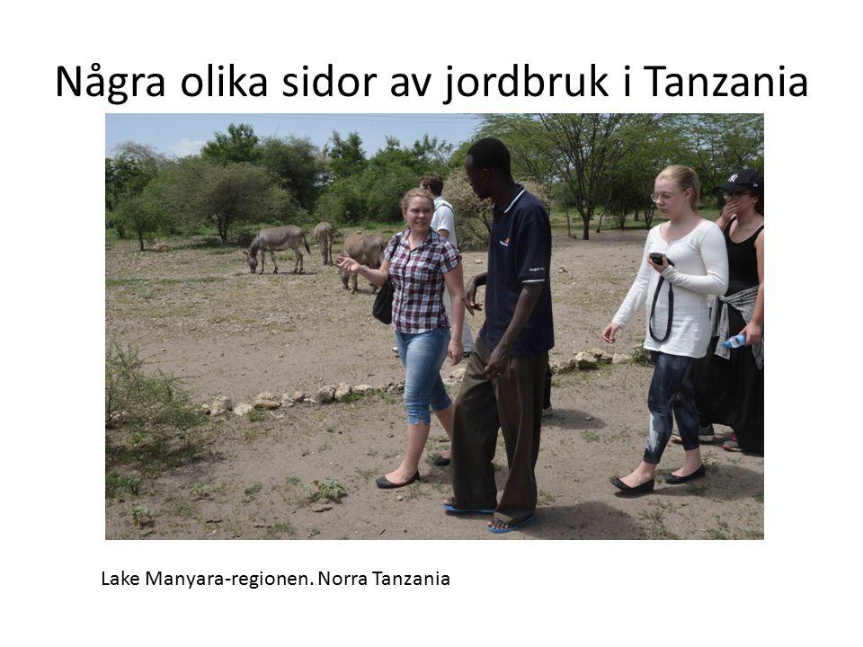 Några olika sidor av jordbruk i Tanzania Lake Manyara-regionen. Norra Tanzania