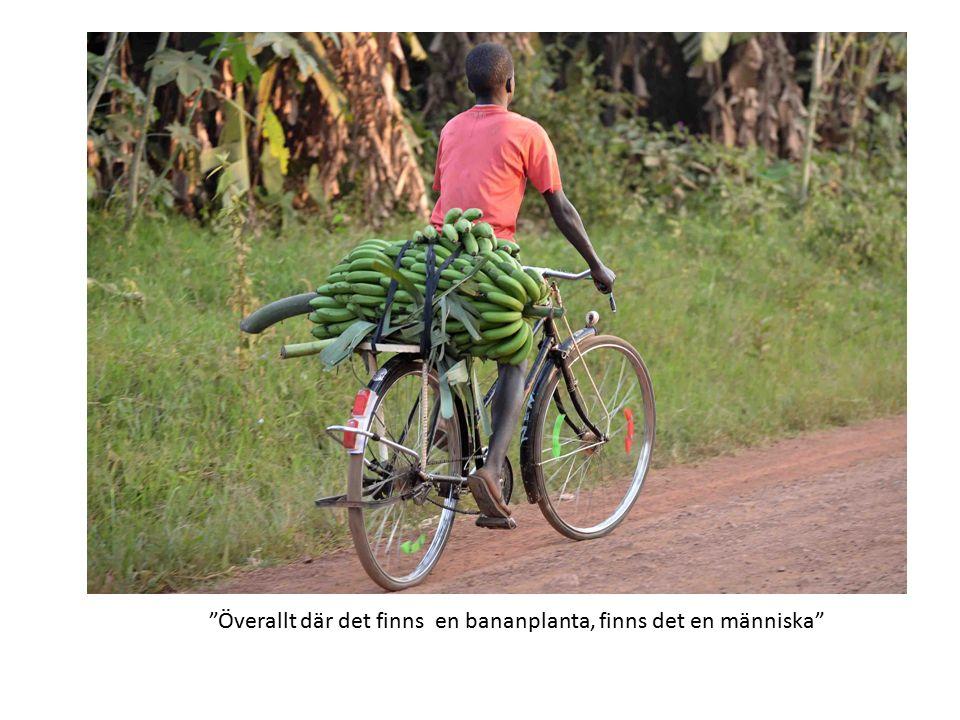 Överallt där det finns en bananplanta, finns det en människa
