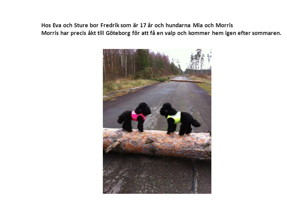 Hos Eva och Sture bor Fredrik som är 17 år och hundarna Mia och Morris Morris har precis åkt till Göteborg för att få en valp och kommer hem igen efter sommaren.
