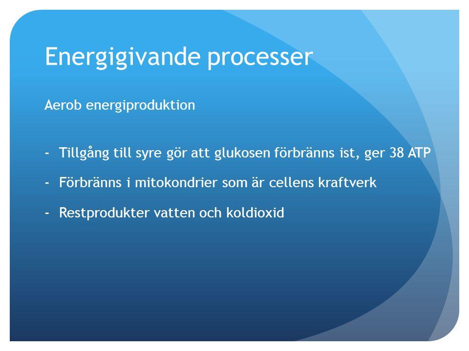 Energigivande processer Aerob energiproduktion -Tillgång till syre gör att glukosen förbränns ist, ger 38 ATP -Förbränns i mitokondrier som är cellens kraftverk -Restprodukter vatten och koldioxid