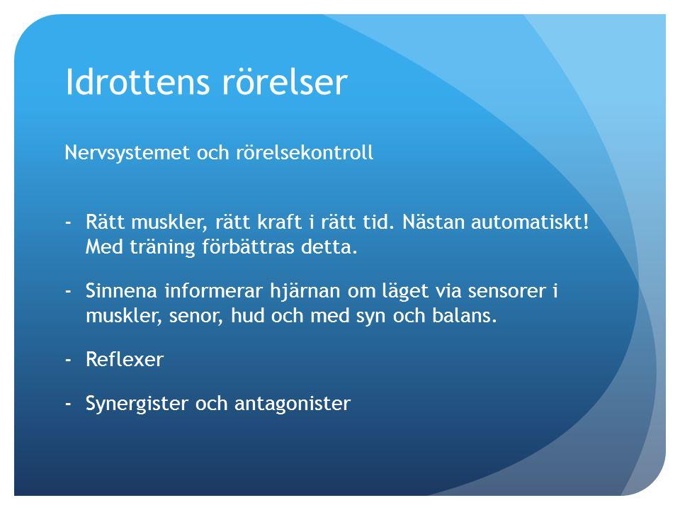 Idrottens rörelser Nervsystemet och rörelsekontroll -Rätt muskler, rätt kraft i rätt tid.