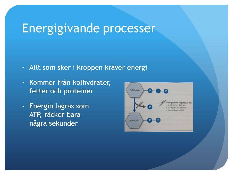 Energigivande processer Anaerob energiproduktion -Hög ansträngningsnivå, ingen/låg syretillgång -ADP  ATP med hjälp av kreatinfosfat ger 1 ATP -Kolhydrater  glukos  glykogen  spjälkning ger 2 ATP -Biprodukt mjölksyra