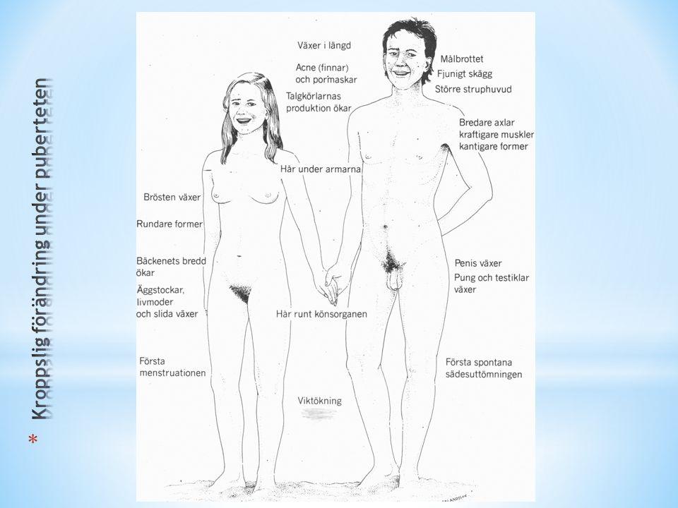 Manligt könshormon börjar tillverkas (Testosteron).