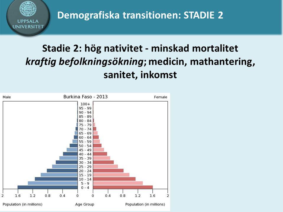 Demografiska transitionen: STADIE 2 Stadie 2: hög nativitet - minskad mortalitet kraftig befolkningsökning; medicin, mathantering, sanitet, inkomst