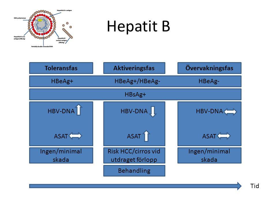 ToleransfasAktiveringsfasÖvervakningsfas HBeAg+ HBeAg+/HBeAg- HBeAg- HBV-DNA ASAT HBV-DNA ASAT HBV-DNA ASAT Behandling HBsAg+ Ingen/minimal skada Risk HCC/cirros vid utdraget förlopp Ingen/minimal skada Tid