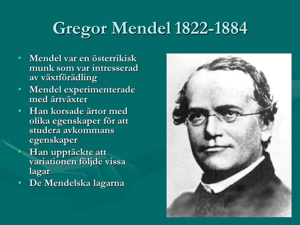Gregor Mendel 1822-1884 Mendel var en österrikisk munk som var intresserad av växtförädlingMendel var en österrikisk munk som var intresserad av växtförädling Mendel experimenterade med ärtväxterMendel experimenterade med ärtväxter Han korsade ärtor med olika egenskaper för att studera avkommans egenskaperHan korsade ärtor med olika egenskaper för att studera avkommans egenskaper Han upptäckte att variationen följde vissa lagarHan upptäckte att variationen följde vissa lagar De Mendelska lagarnaDe Mendelska lagarna