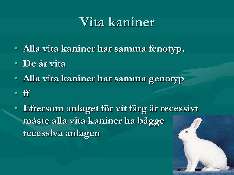 Vita kaniner Alla vita kaniner har samma fenotyp.Alla vita kaniner har samma fenotyp.