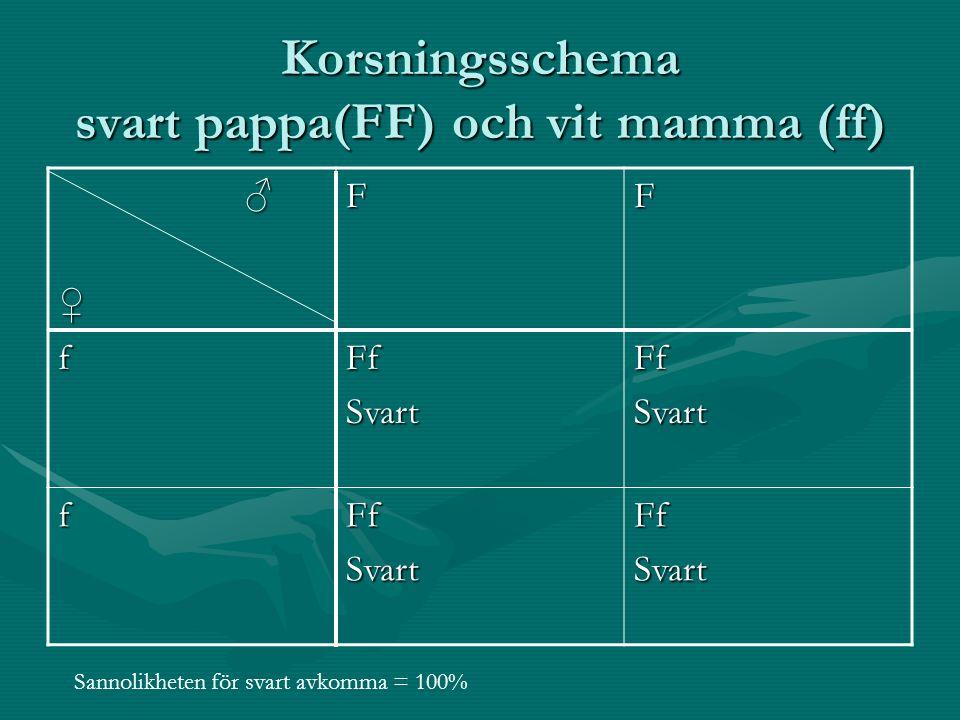 Korsningsschema svart pappa(FF) och vit mamma (ff) ♂♀FF fFfSvartFfSvart fFfSvartFfSvart Sannolikheten för svart avkomma = 100%