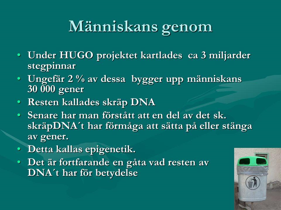Människans genom Under HUGO projektet kartlades ca 3 miljarder stegpinnarUnder HUGO projektet kartlades ca 3 miljarder stegpinnar Ungefär 2 % av dessa bygger upp människans 30 000 generUngefär 2 % av dessa bygger upp människans 30 000 gener Resten kallades skräp DNAResten kallades skräp DNA Senare har man förstått att en del av det sk.