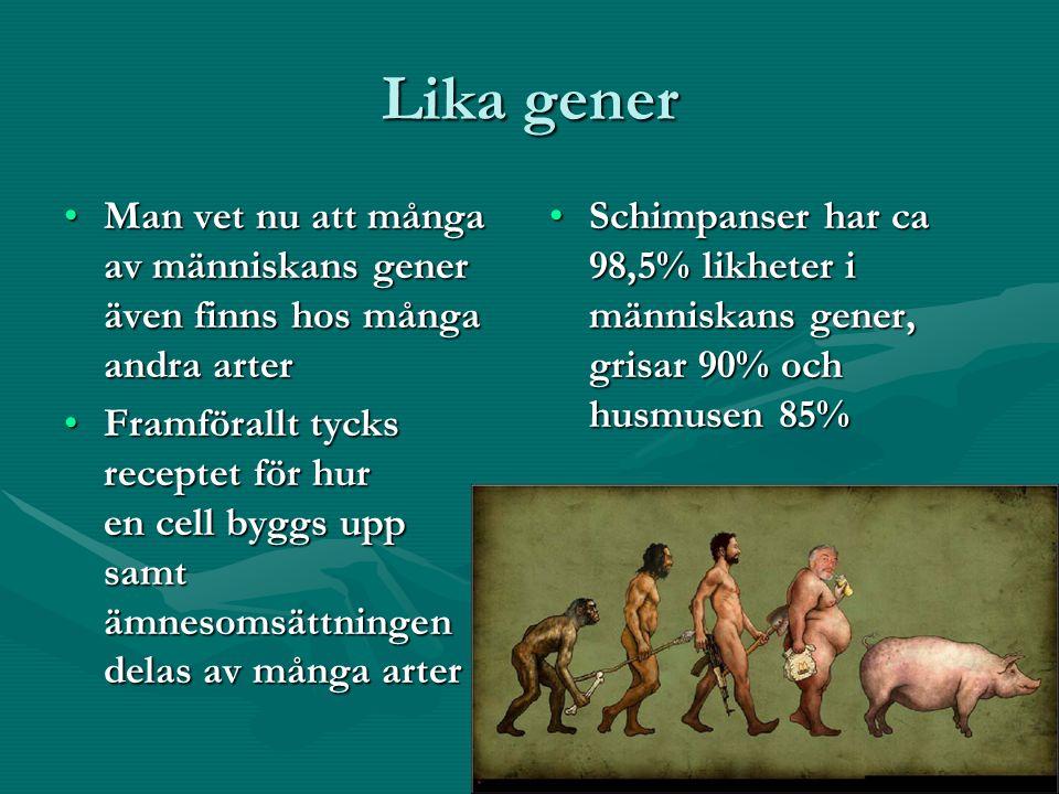 Lika gener Man vet nu att många av människans gener även finns hos många andra arterMan vet nu att många av människans gener även finns hos många andra arter Framförallt tycks receptet för hur en cell byggs upp samt ämnesomsättningen delas av många arterFramförallt tycks receptet för hur en cell byggs upp samt ämnesomsättningen delas av många arter Schimpanser har ca 98,5% likheter i människans gener, grisar 90% och husmusen 85%