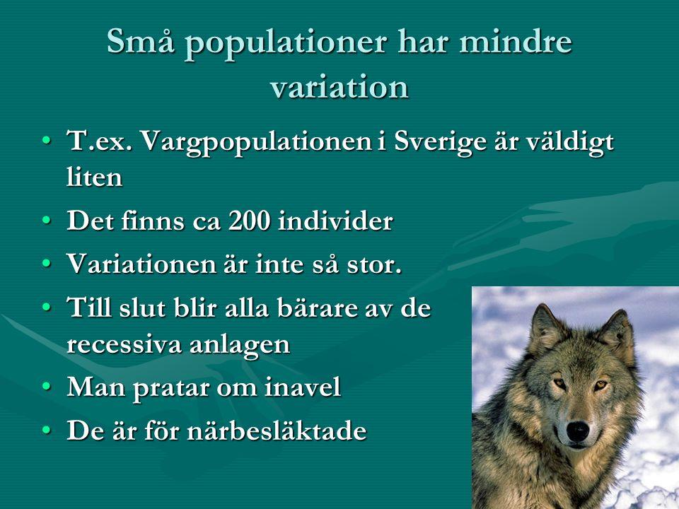 Små populationer har mindre variation T.ex. Vargpopulationen i Sverige är väldigt litenT.ex.