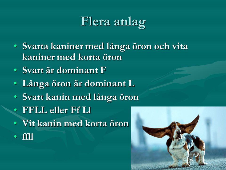 Flera anlag Svarta kaniner med långa öron och vita kaniner med korta öronSvarta kaniner med långa öron och vita kaniner med korta öron Svart är dominant FSvart är dominant F Långa öron är dominant LLånga öron är dominant L Svart kanin med långa öronSvart kanin med långa öron FFLL eller Ff LlFFLL eller Ff Ll Vit kanin med korta öronVit kanin med korta öron ffllffll