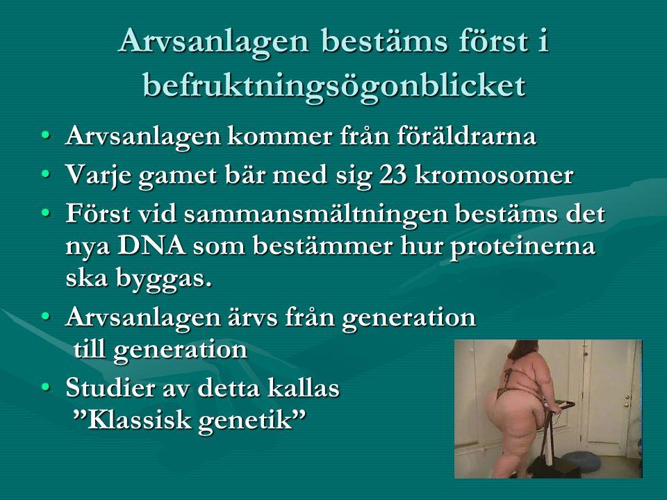 Arvsanlagen bestäms först i befruktningsögonblicket Arvsanlagen kommer från föräldrarnaArvsanlagen kommer från föräldrarna Varje gamet bär med sig 23 kromosomerVarje gamet bär med sig 23 kromosomer Först vid sammansmältningen bestäms det nya DNA som bestämmer hur proteinerna ska byggas.Först vid sammansmältningen bestäms det nya DNA som bestämmer hur proteinerna ska byggas.