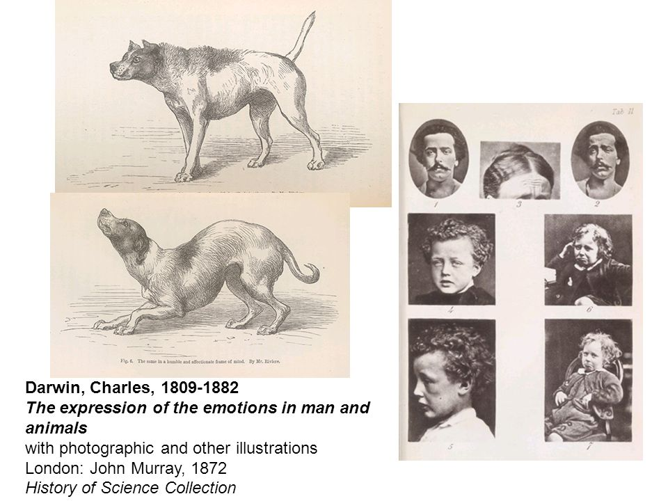 Darwin, Charles, 1809-1882 The expression of the emotions in man and animals with photographic and other illustrations London: John Murray, 1872 History of Science Collection