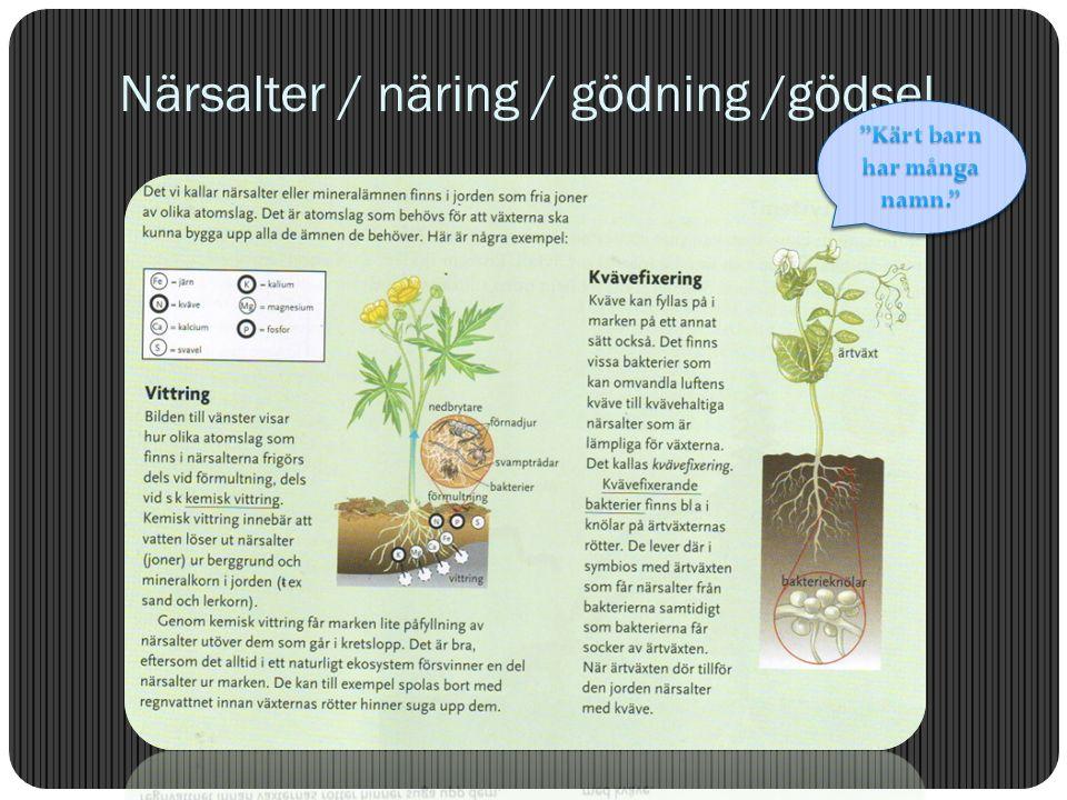 3. Vad visar näringspyramiden. Sidan 115/99 1.