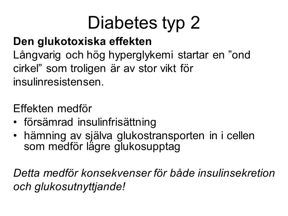 Diabetes typ 2 Den glukotoxiska effekten Långvarig och hög hyperglykemi startar en ond cirkel som troligen är av stor vikt för insulinresistensen.