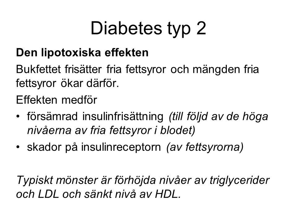 Diabetes typ 2 Den lipotoxiska effekten Bukfettet frisätter fria fettsyror och mängden fria fettsyror ökar därför.