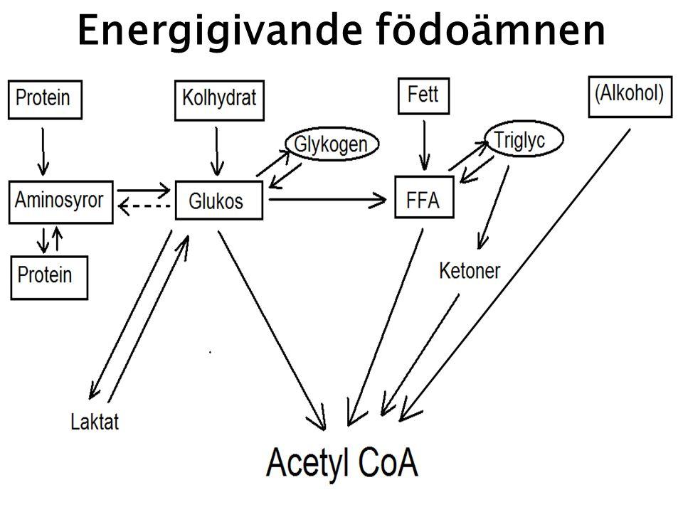 Energigivande födoämnen