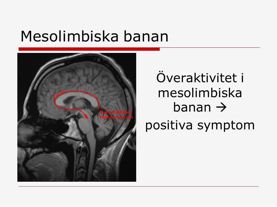 Mesolimbiska banan Överaktivitet i mesolimbiska banan  positiva symptom