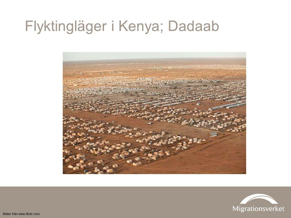 Flyktingläger i Kenya; Dadaab