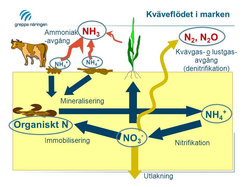 Kväveflödet i marken NO 3 - NH 4 + N 2, N 2 O NH 3 Organiskt N NH 4 + Utlakning Nitrifikation Immobilisering Mineralisering Kvävgas- o lustgas- avgång (denitrifikation) Ammoniak -avgång